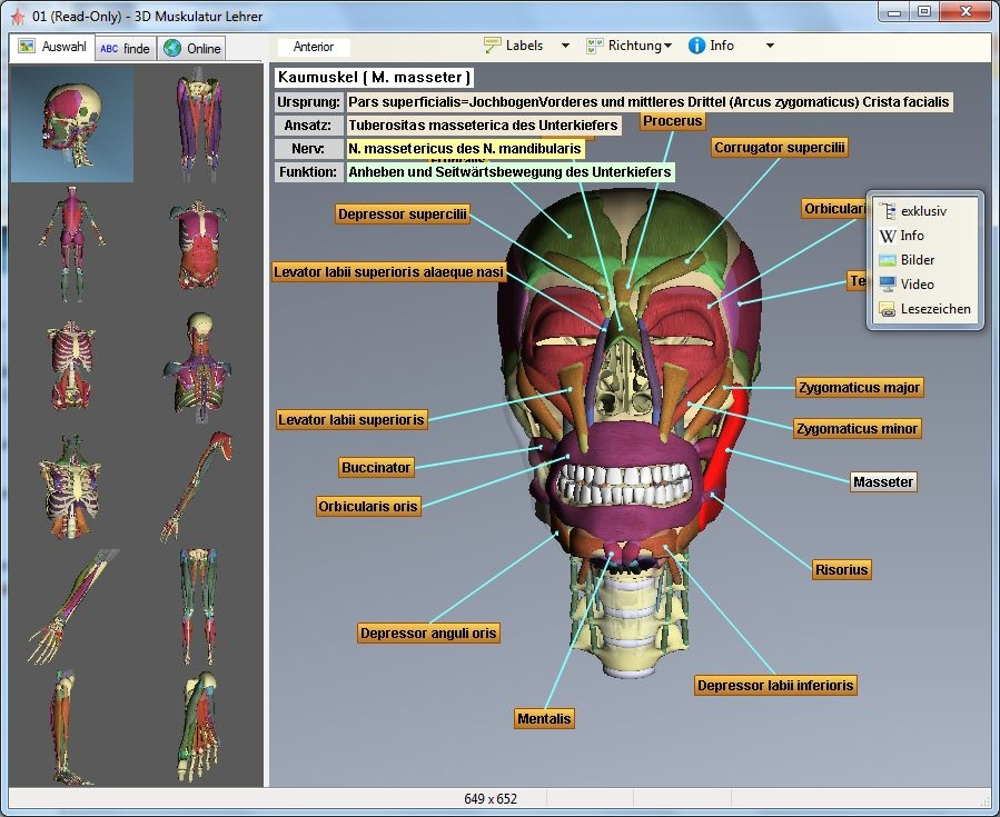 3D Muskulatur Lehrer | heise Download