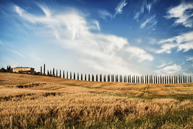 Cypress Alley [Val d'Orcia, Tuscany, Italy]