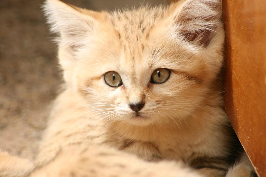 Wild katzen baby