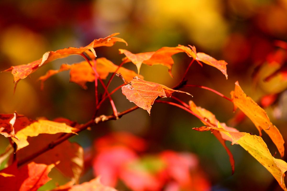 Herbst von Stefan Mayer  Galerie  heise Foto