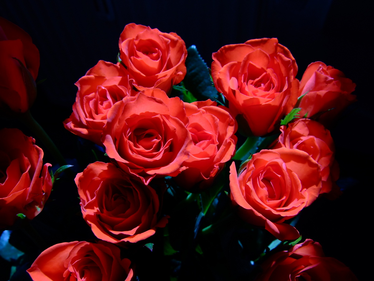 Www.Rote Rosen