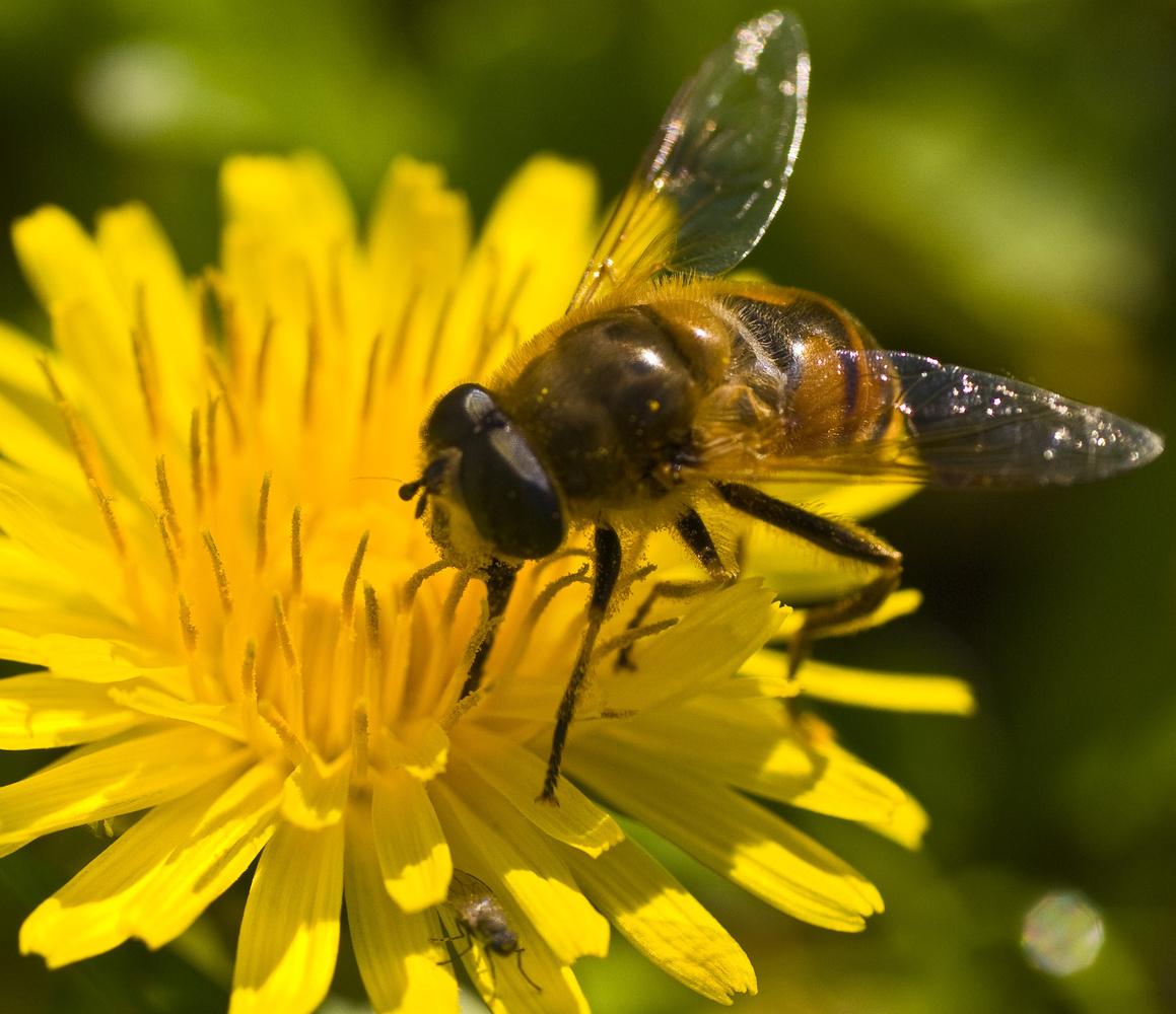 Фото для детей о пчелах