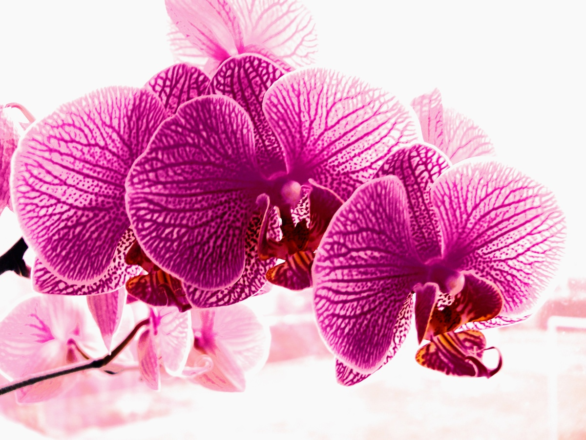 orchidee von terrabooster galerie heise foto. Black Bedroom Furniture Sets. Home Design Ideas