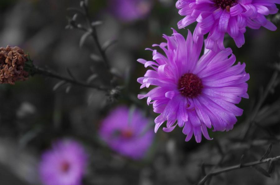 Yarial.com = Weiß Lila Blumen ~ Interessante Ideen für die ...