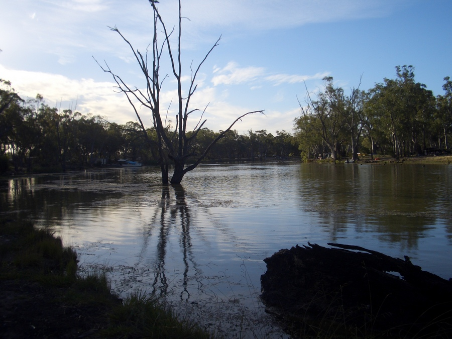 toter baum im murray river australien von dundo galerie heise foto. Black Bedroom Furniture Sets. Home Design Ideas