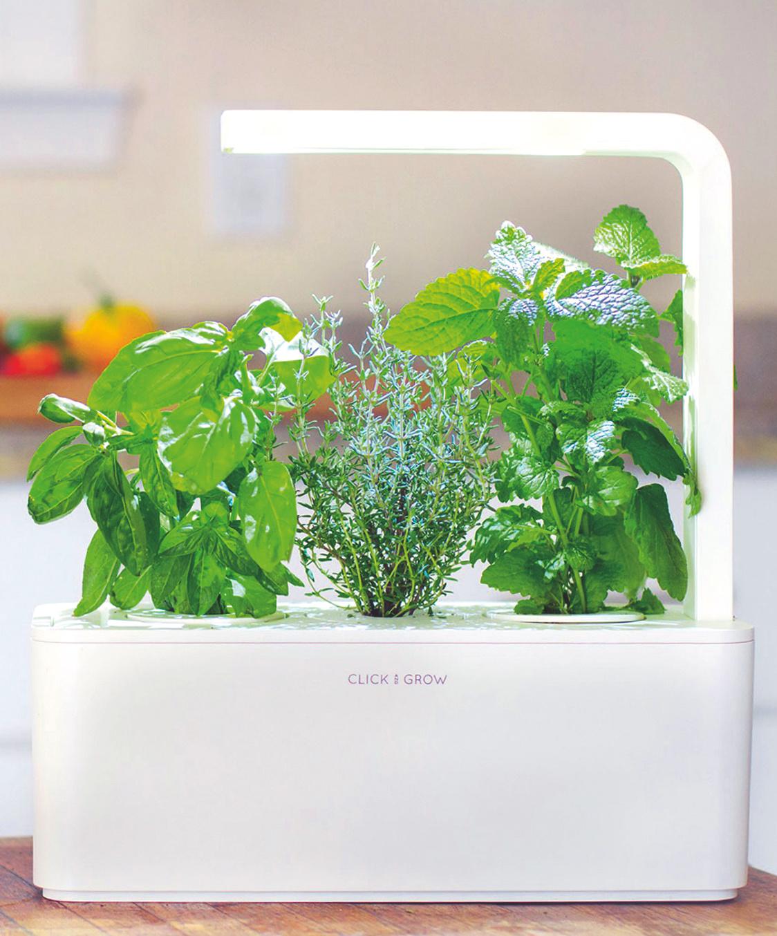 die wenig wasser brauchen top diese pflanzen brauchen. Black Bedroom Furniture Sets. Home Design Ideas